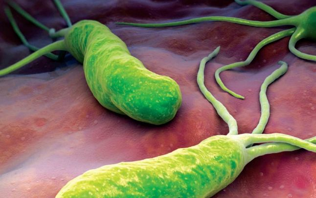 Leguma care omoara Helicobacter Pylori
