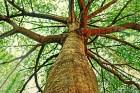 tree-926354_960_720