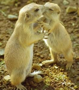 愛し合う二人