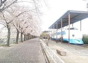新幹線公園でお花見