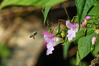 Bee by Benjamin Akira Tallamy