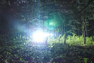 Floodlight - photo by Mike Gilpin and Benjamin Akira Tallamy