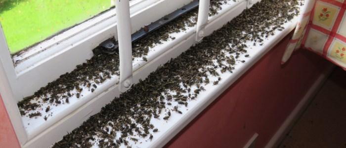 Fly Control - Get Rid Of Flies - Bentley Environmental