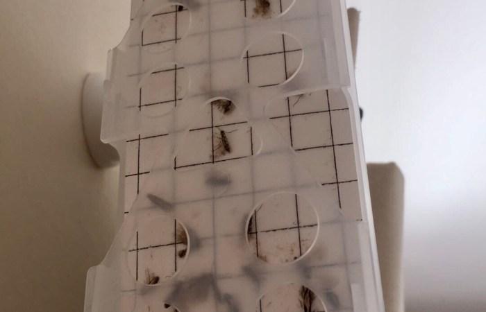 Moth trap - pest control winchester & Andover - Bentley Environmental