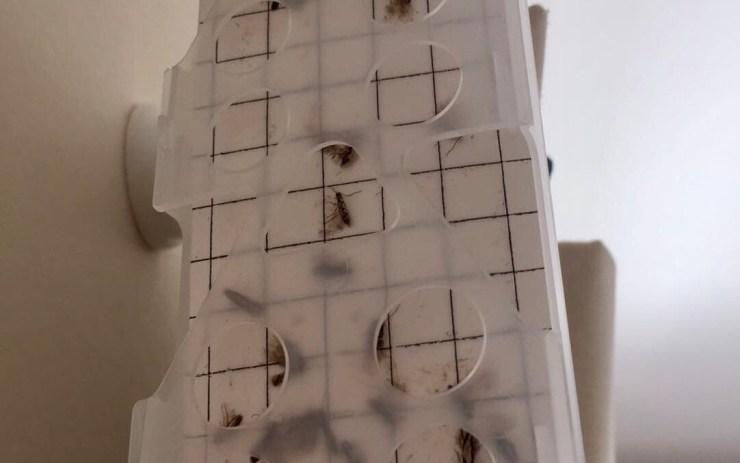 Moth Control Winchester & Andover - Bentley Environmental Pest Control