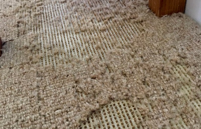 carpet damage - Bentley environmental - pest control
