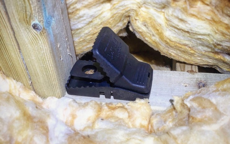 rat trapping in loft - local pest control