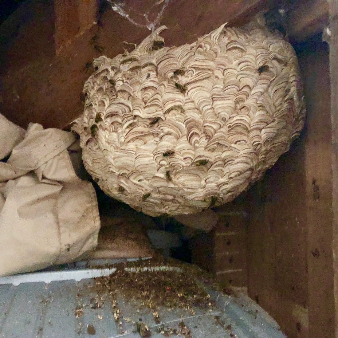 Wasp Nest Removal - Bentley Environmental - Pest Control