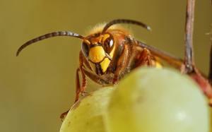 Hornets Nest Treatment