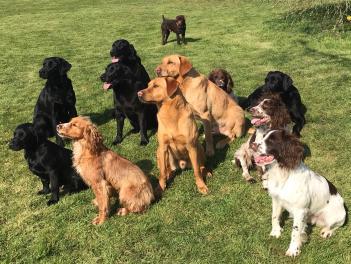 Group photo of Tony's dogs