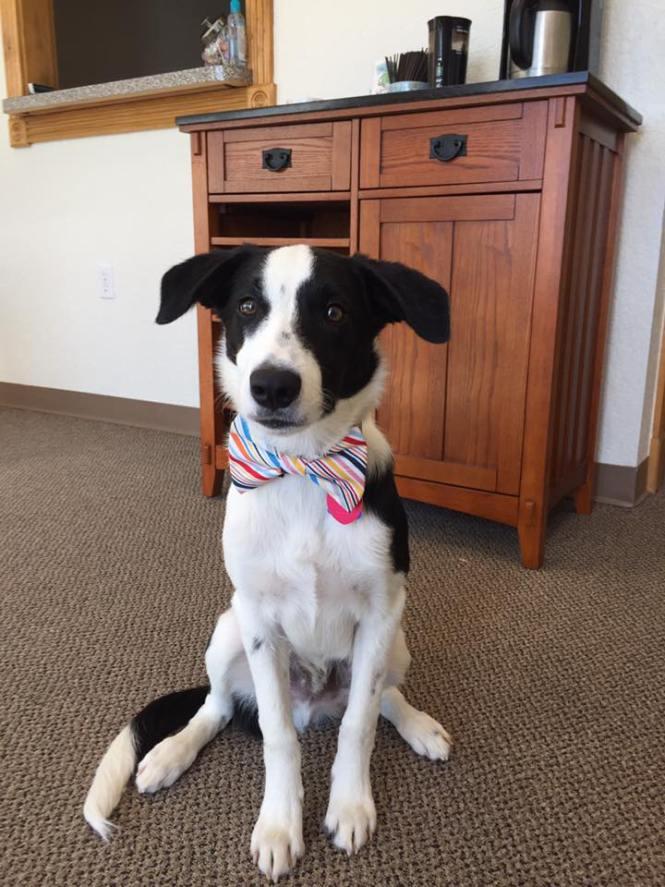 bentonville-dog-lawyer