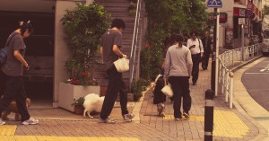 Dog obedience school, Shibuya