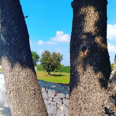 Puglia13