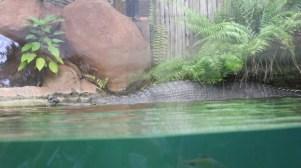 gharial Singapore Zoo