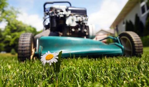 BCCOA Lawn Chore Program