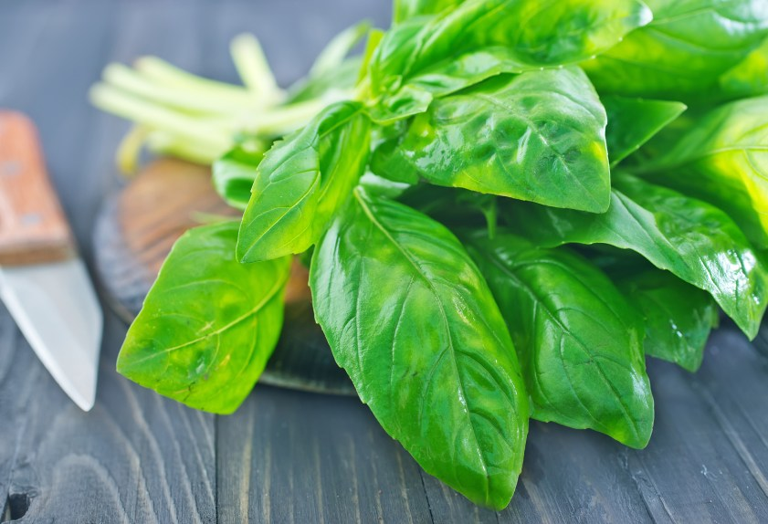 fresh Basil on a wooden Board and on the table