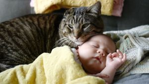 When a baby lies on the couch with a cat, something unexpected happens!