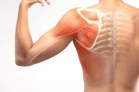 Shoulder Instability And Dislocations