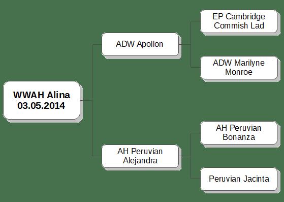 WWAH Alina - Stammbaum, Bergblick Alpakas, Bayern