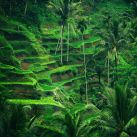 BKK-Frode_Grindheim-Fields_of_Green