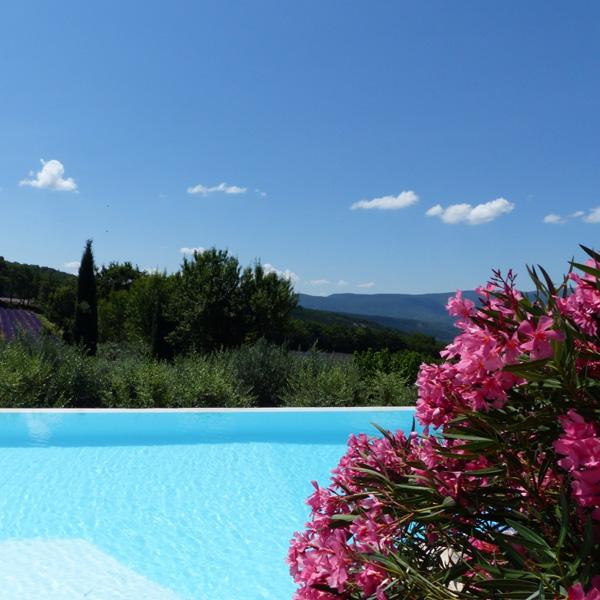 laurier en fleur au bord de la piscine
