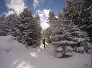 Die zweite Abkürzung durch den Wald.
