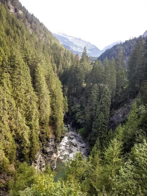 Dichte Nadelwälder