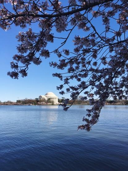 Tidal basin - Jefferson memorial