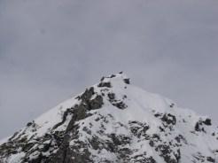Eine Gämse auf einem Gipfel