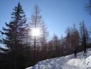 Forstweg Göge-Alm