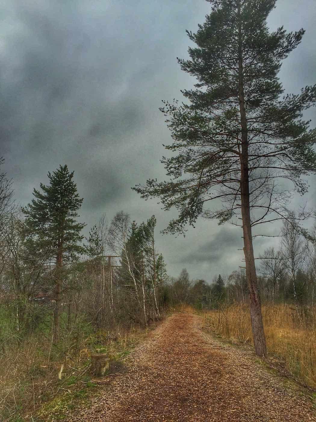 Wanderung durchs Werdensteiner Moor
