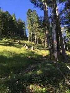 Auf dem Waldweg zur Eckalpe
