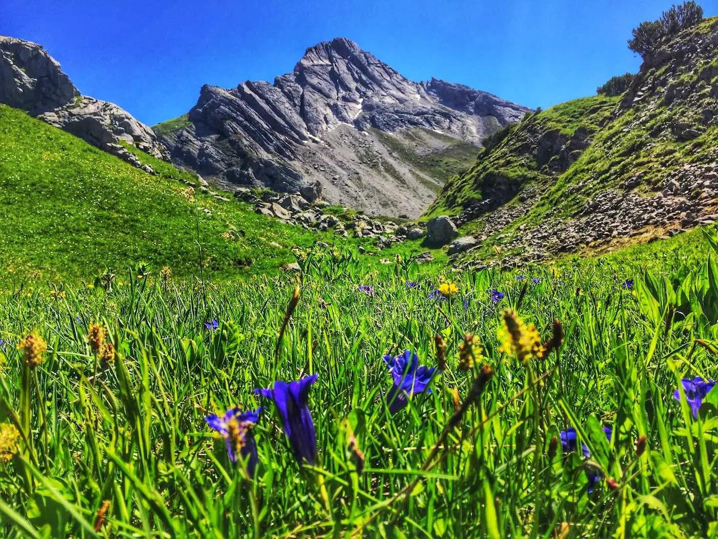 Blumenwiese unterhalb des Biberkopf