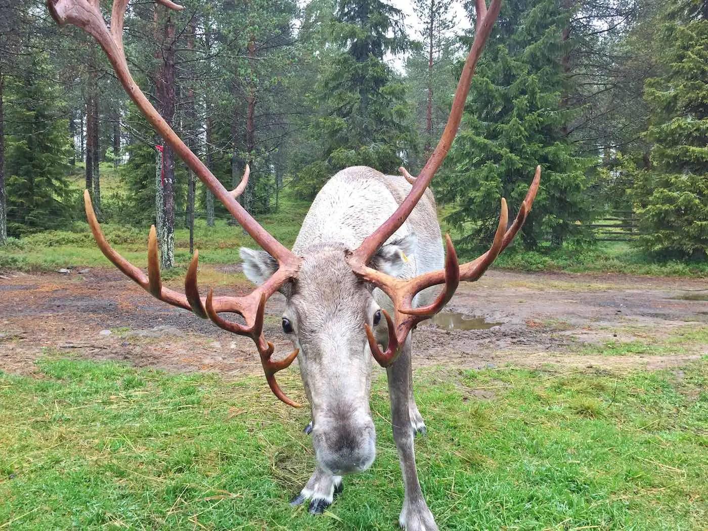 Weites Finnland
