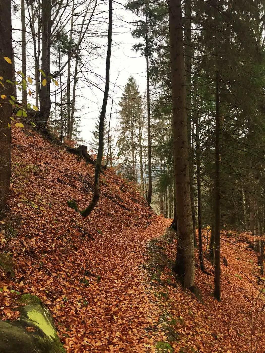 Waldtrail in Richtung Winkel