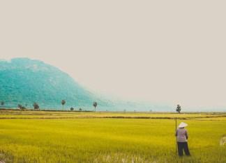 Ekspor Produk Pertanian RI