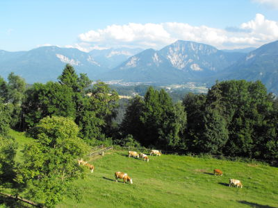 Utsikt med kor