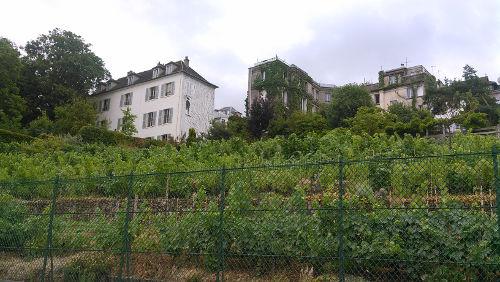 Clos-Montmartre
