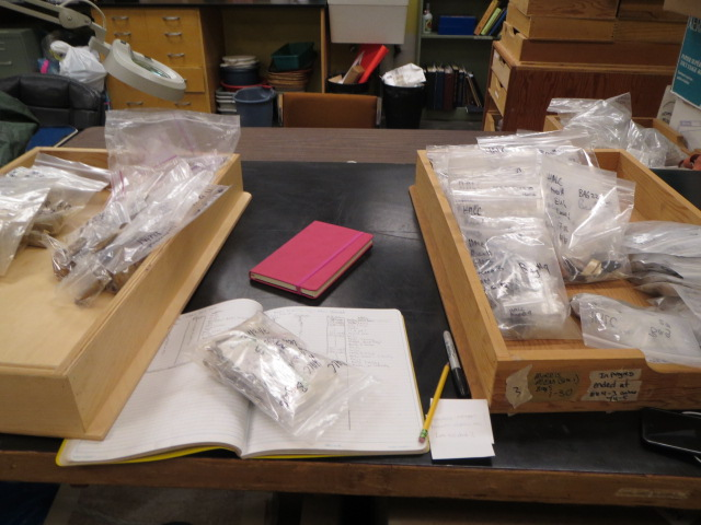 At the Archeologist's lab bench. Faunal and metal remains from the site are cataloged back in the lab. Courtesy of Gloria Keng.