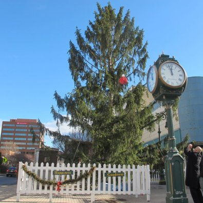 "In this Dec. 12, 2014 photo City Councilman Jeff Waltman photographs the city's official Christmas tree in Reading, Pa. Waltman fought to save the 50-foot Norway spruce that many residents compared to the spindly tree in ""A Charlie Brown Christmas,"" and the city is now embracing the ""Peanuts"" theme. (AP Photo/Michael Rubinkam)"