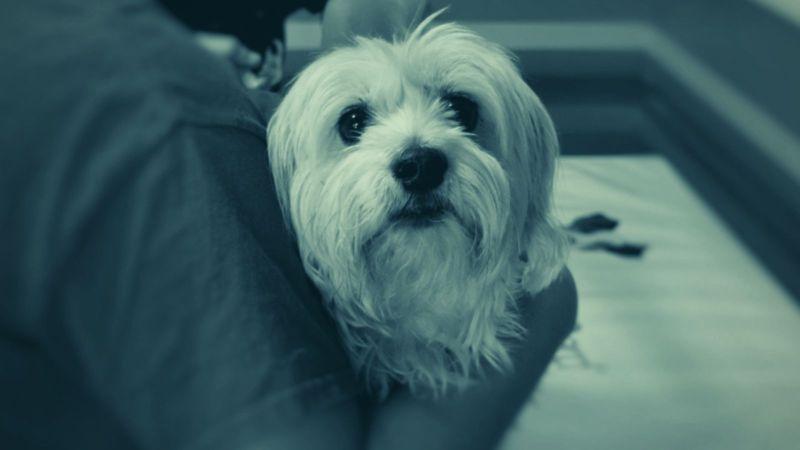 Hundetrainer Berlin - Erste Hilfe bei Ihrem Hund