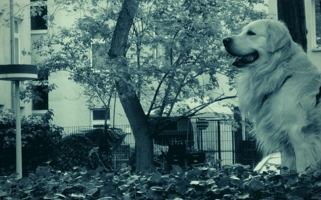 Hundetrainer Berlin - Aktuelles