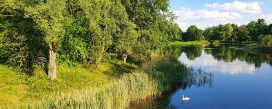 Berlin Britzer Garten Teich, Schilf und Schwan