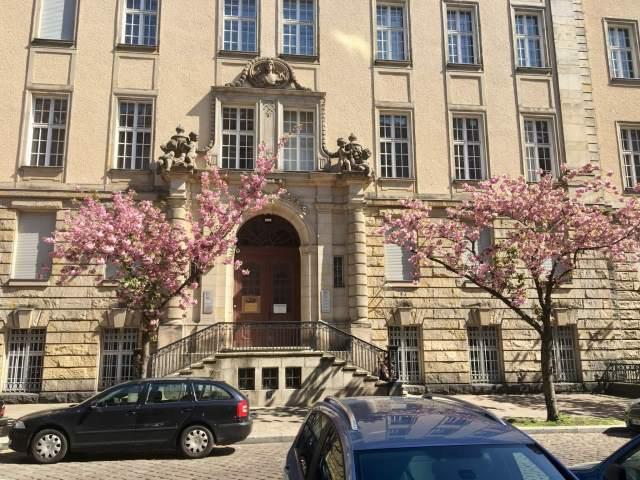 Kirsebærtræer i Berlin