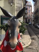 And a donkey - equally important animal around this region.