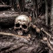 Resti umani da Skitterphoto CC 0 https://skitterphoto.com/photos/2274/human-skull