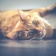 Gatto, DariuszSankowski, CC0