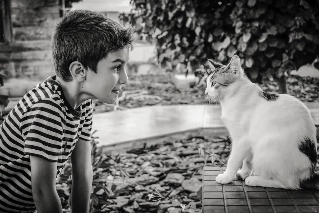 Pets C dimitrisvetsikas boy-2886169_1920