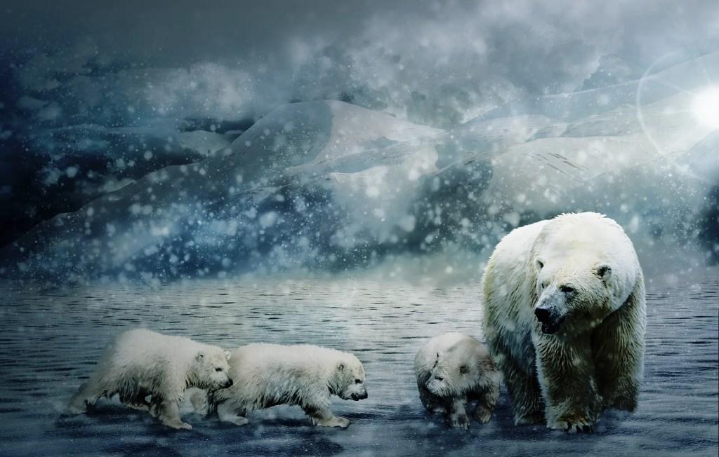 Mercatino di Natale, C Papafox https://pixabay.com/it/photos/polar-bear-mondo-animale-orso-polare-3413072/