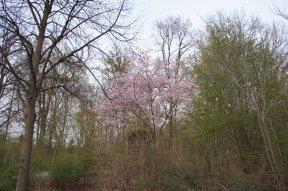 spring18